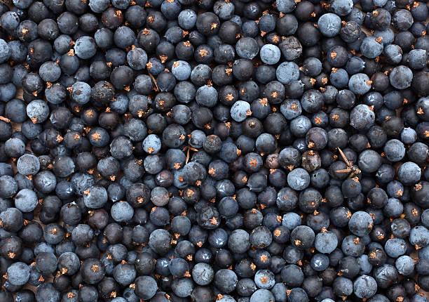 Bayas communis Juniperus deppeana común - foto de stock