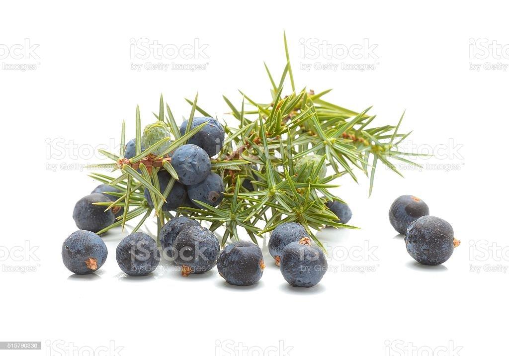 Common Juniper (Juniperus communis) fruits stock photo