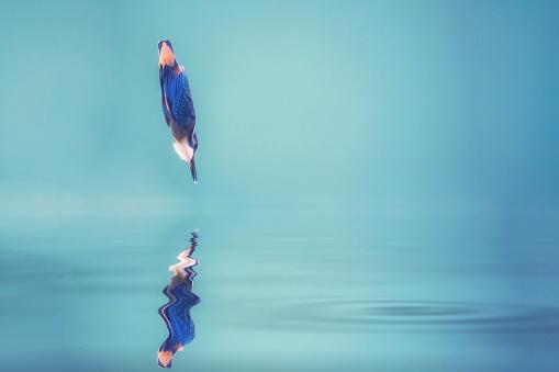 Common Kingfisher Alcedo Atthis Stockfoto und mehr Bilder von Arbeiten