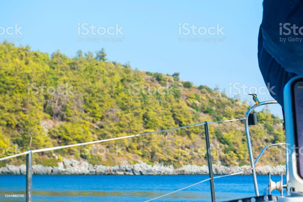 Common Kingfisher bird on boat bow