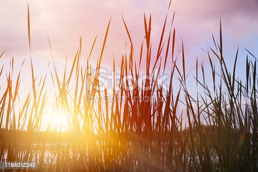 876420064 istock photo Common reeds and lake at sunset 1184012342