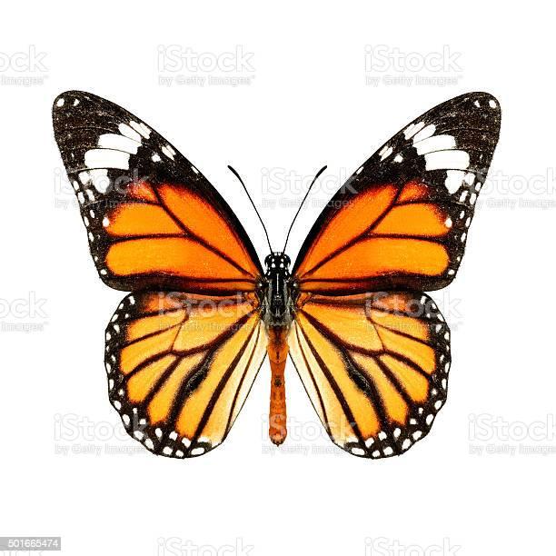 Common tiger picture id501665474?b=1&k=6&m=501665474&s=612x612&h=4at2qq6eurohrlqgqmiqjslg w1rispceulzz4glcjs=