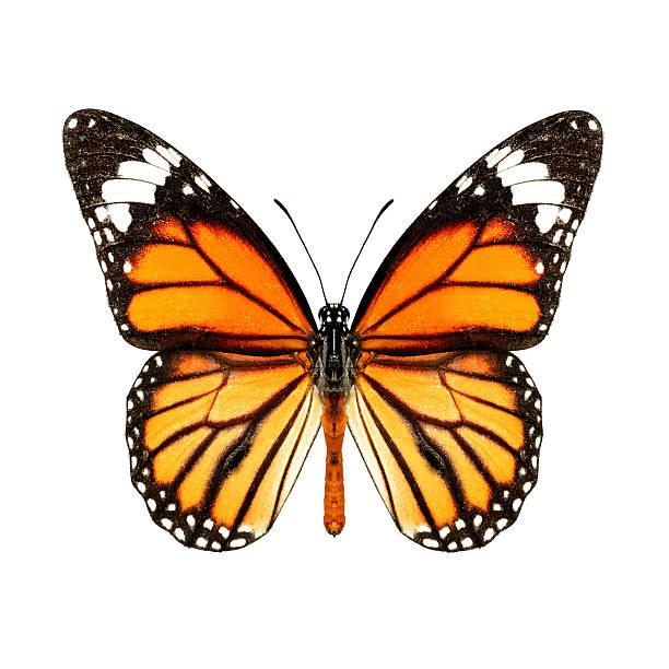 Common tiger picture id501665474?b=1&k=6&m=501665474&s=612x612&w=0&h=ba0cpwmspkhbryox05spc20j2t9tpdzn l36scsoiqg=