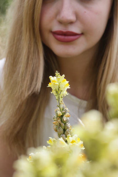 common toadflax beautiful young blonde bulgarian outdoor girl - whiteway bulgarian outdoor girl stock photos and pictures
