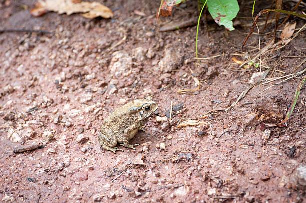중국두꺼비, 태국 - naegleria fowleri 뉴스 사진 이미지