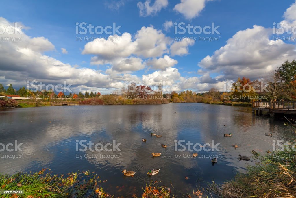 Commonwealth Lake Park with ducks in Beaverton Oregon on a beautiful fall day USA stock photo