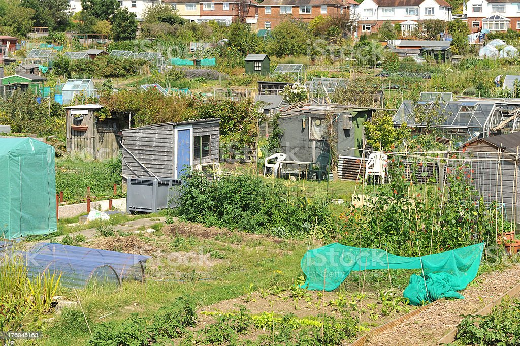 Communal garden allotments. royalty-free stock photo