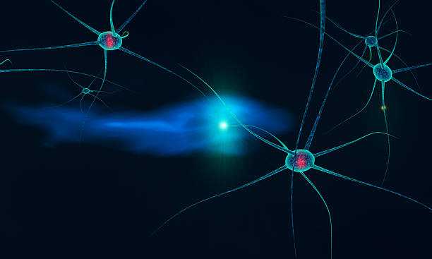 communication between neurons stock photo