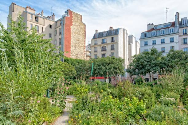 gemeinschaftsgarten in paris - urbaner garten stock-fotos und bilder