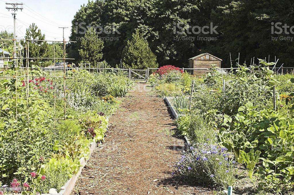 community garden royalty-free stock photo