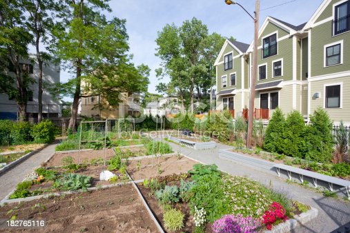 Community garden in front of homes. There are flowers and vegetables growing. The sun is shining and it's a warm summer day.