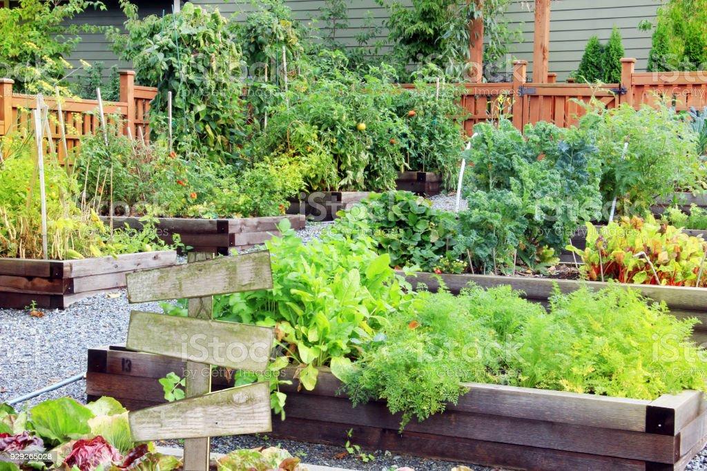 Community Gemüsegarten – Foto