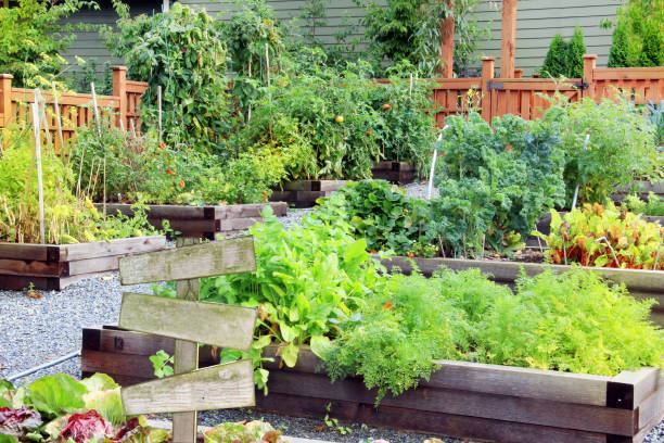 Community vegetable garden Lush and organic community vegetable, fruit and herb garden in summer with a blank wooden sign. Add your own text. community garden stock pictures, royalty-free photos & images