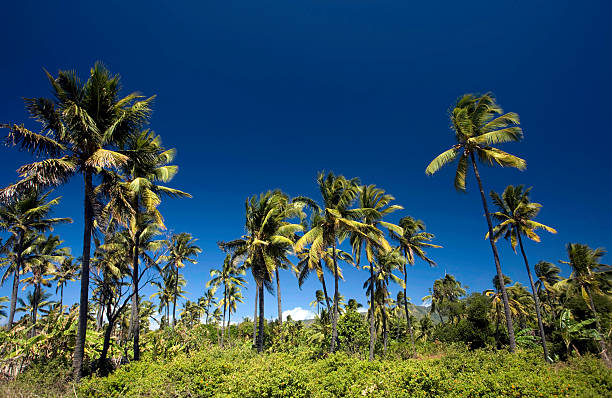comores, anjouan, de coconut grove. - comores photos et images de collection