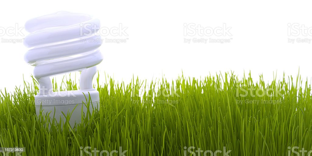 Compact fluorescent lightbulb (XL) royalty-free stock photo