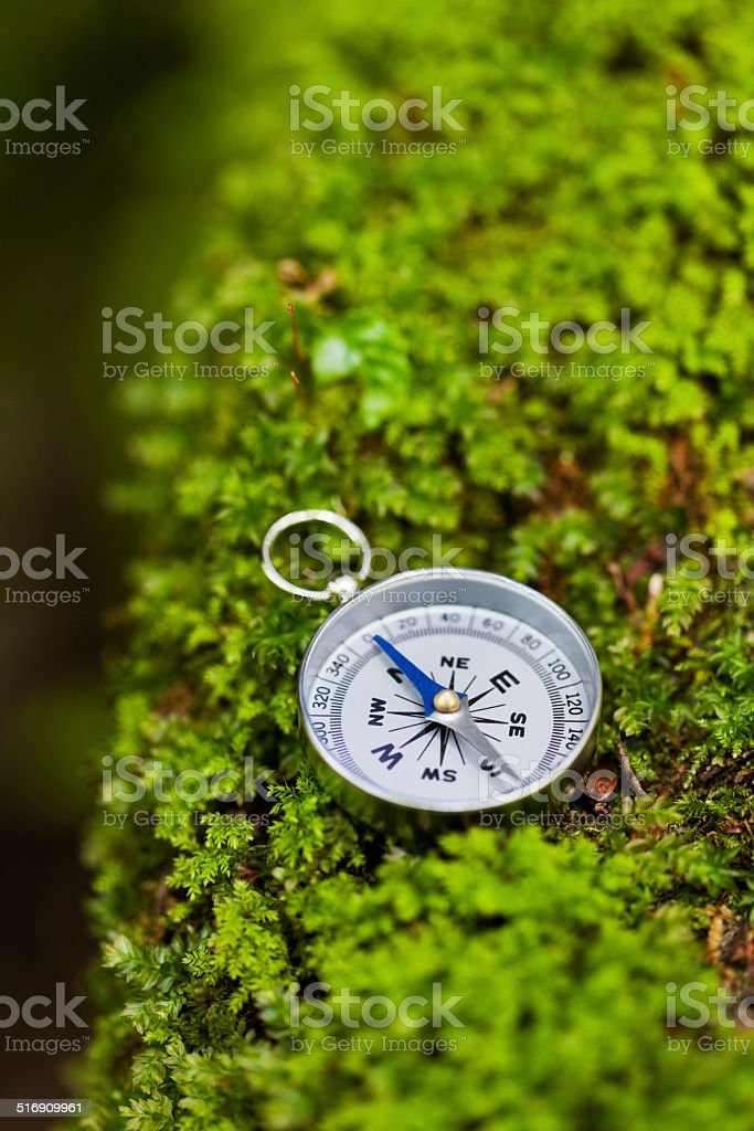 Compass in Forest stock photo