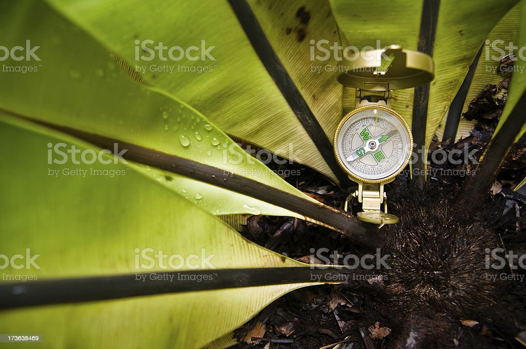 Compass in the Jungle stock photo