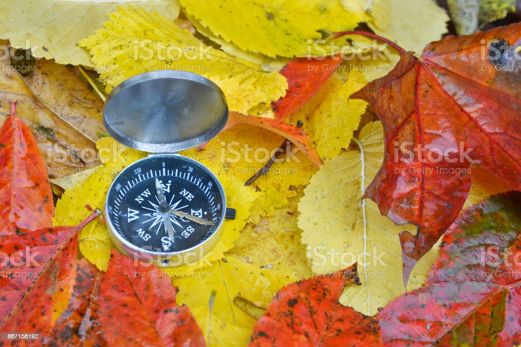 Compass in the rain on the leaves. stock photo
