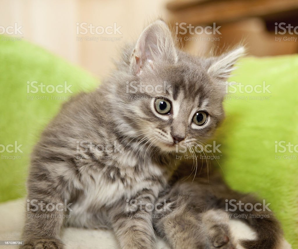 complentative kitty stock photo