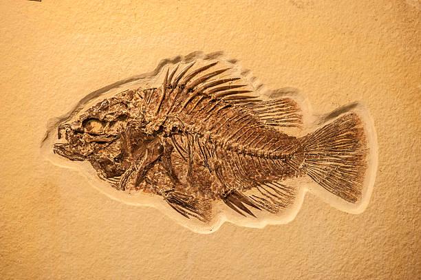 Pescado fósil completa - foto de stock