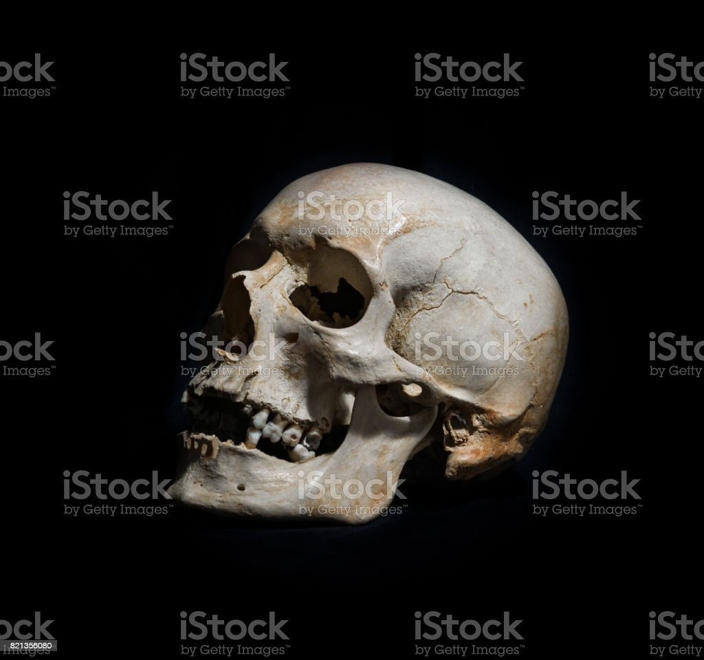 Complete Human Skull on Black Background stock photo