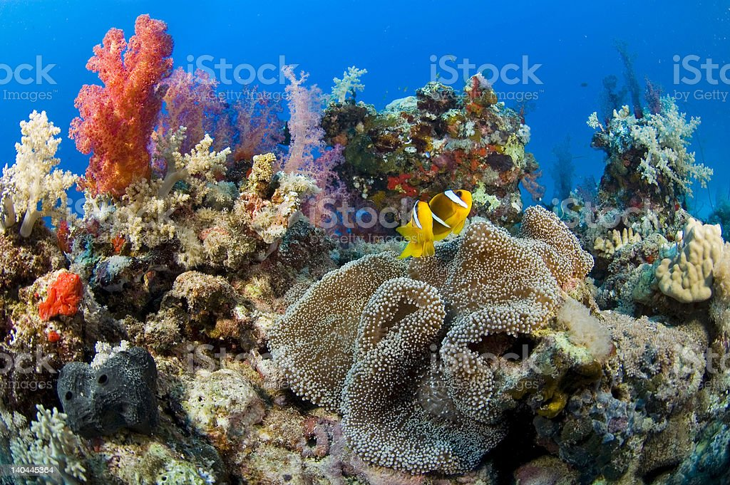 Complete reef stock photo