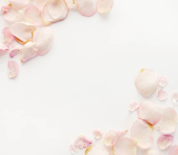 composition flat lay and paper sheet - petal stock pictures, royalty-free photos & images
