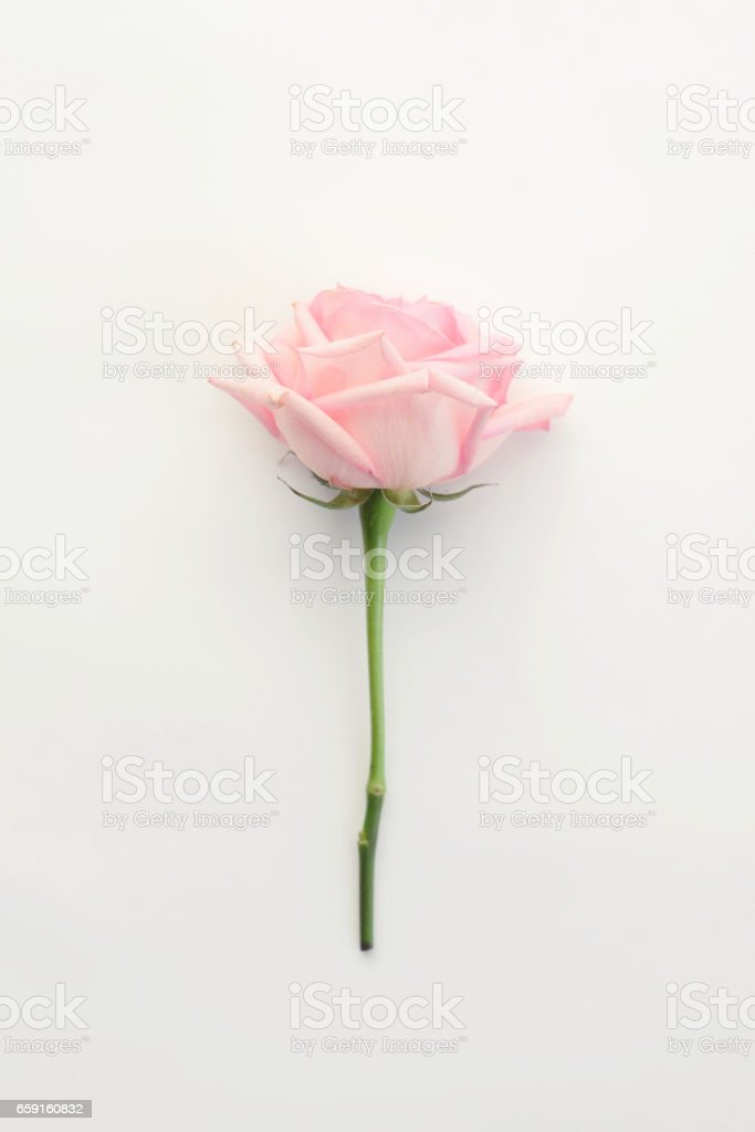Zusammensetzung flach legen, Rose – Foto