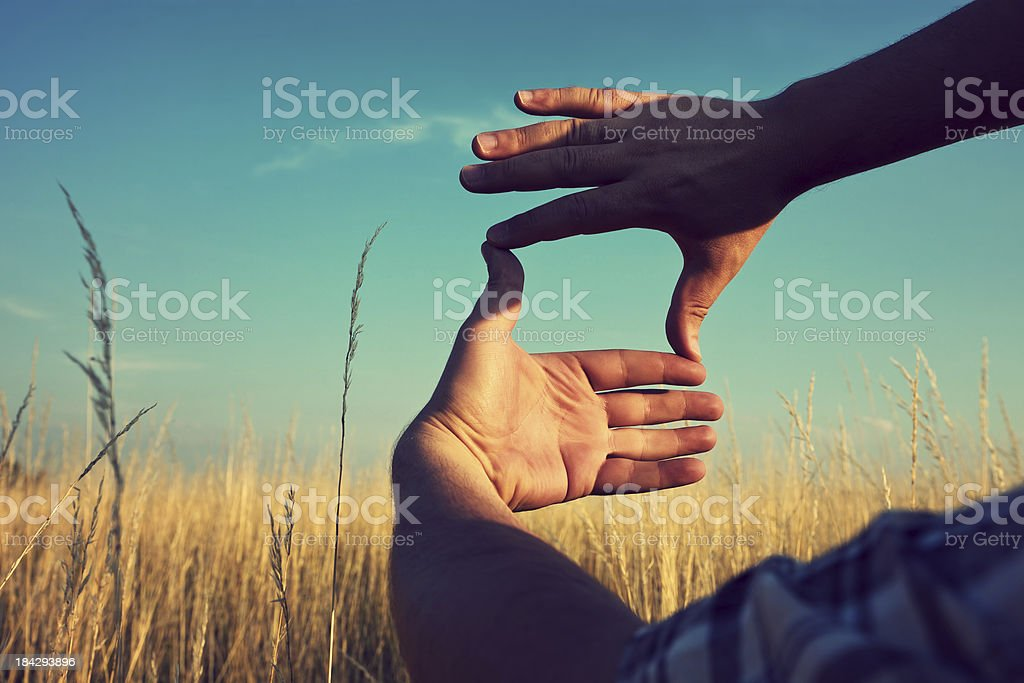 Composition frame in a field of wheat. Hand frame composition. stock photo