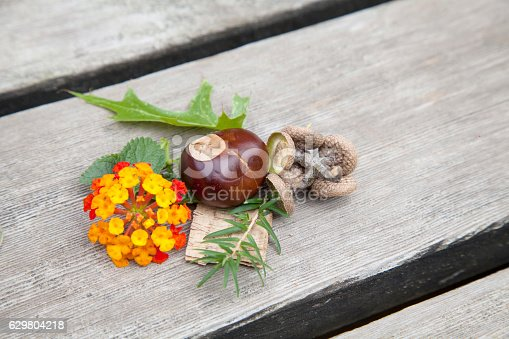 istock Composition from nuts, seeds and flowers lying on wooden background. 629804218