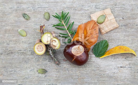 istock Composition from nuts, seeds and flowers lying on wooden background. 635999602