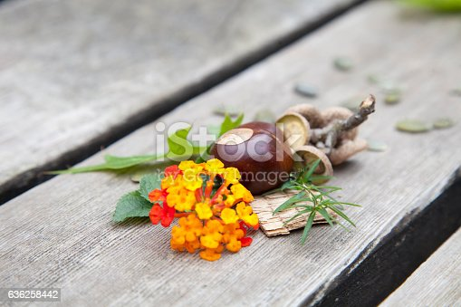istock Composition from nuts, seeds and flowers lying on wooden background. 636258442