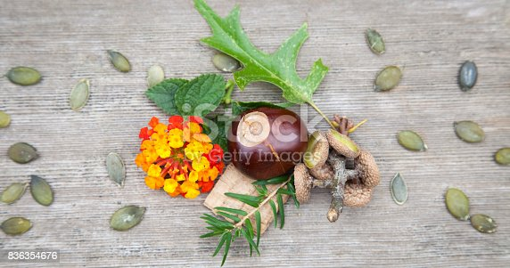 istock Composition from nuts, seeds, sticks and flowers lying on the wooden background. 836354676