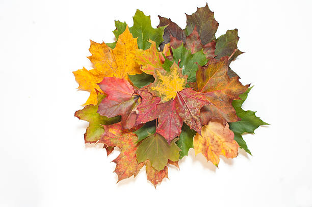 Composition made of dried, colorful autumn leaves stock photo