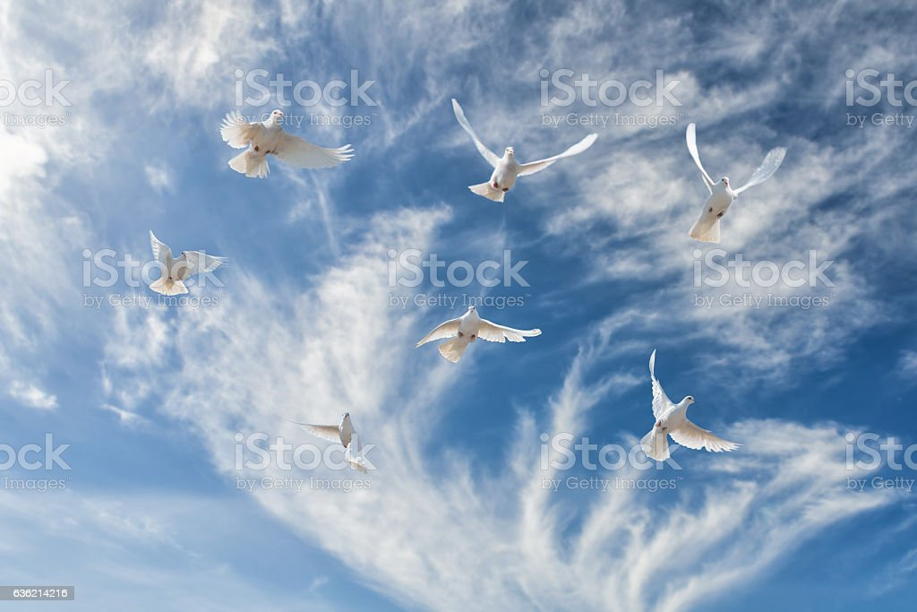 Composition of beautiful white doves in a blue sky. stock photo