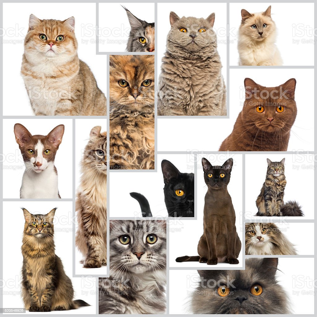 Composition of cats stock photo