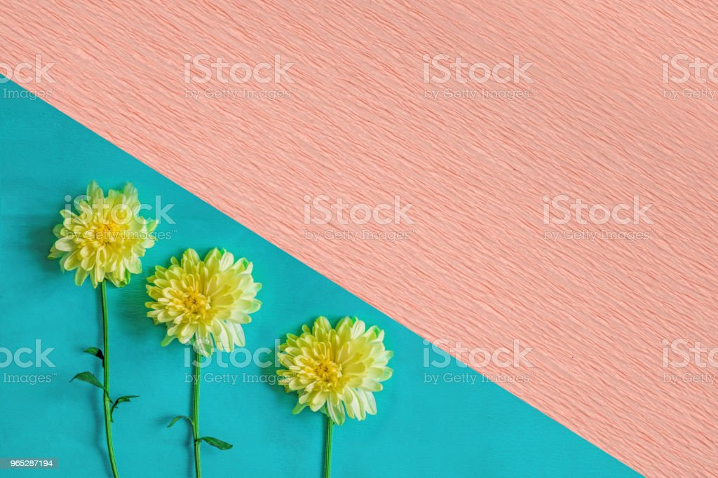 Composition of chrysanthemum flowers with blank space for text, royalty-free stock photo