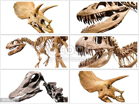istock Composition of dinosuars skeletons on white isolated background. 872072512