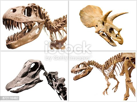 istock Composition of dinosuars skeletons on white isolated background. 872116462