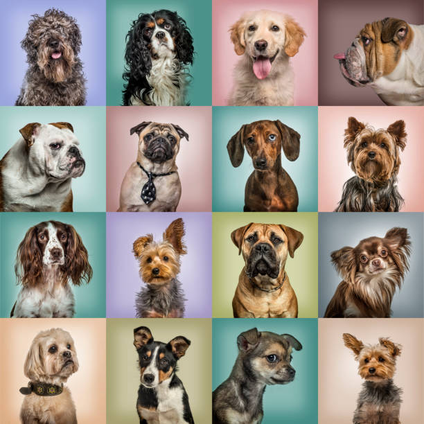 Composition of dogs against colored backgrounds picture id944089908?b=1&k=6&m=944089908&s=612x612&w=0&h=fnrixl3szwz6mlcucnga2ab7wuet3owl7eilbgvaaxs=