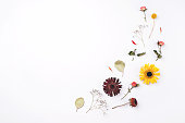 istock Composition of dry flowers on white background. 1200785975