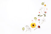 istock Composition of dry flowers on white background. 1202121514