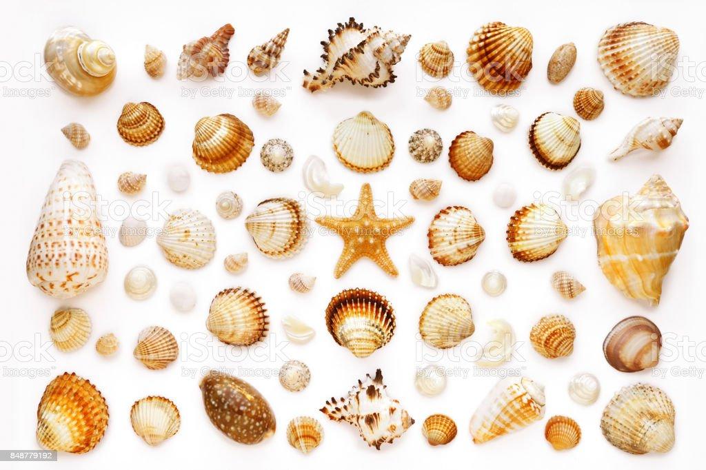 Zusammensetzung von exotischen Muscheln und Seesterne – Foto