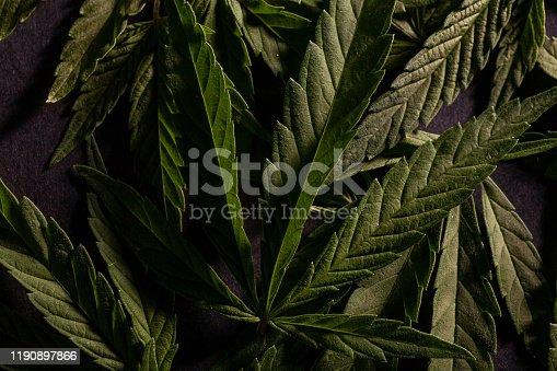 936410150 istock photo Composition of fresh marijuana plant and leaves 1190897866