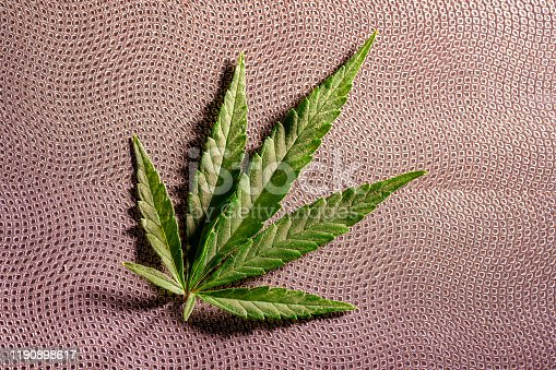 936410150istockphoto Composition of fresh marijuana plant and leaves 1190898617
