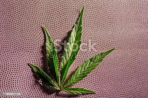 936410150 istock photo Composition of fresh marijuana plant and leaves 1190902128