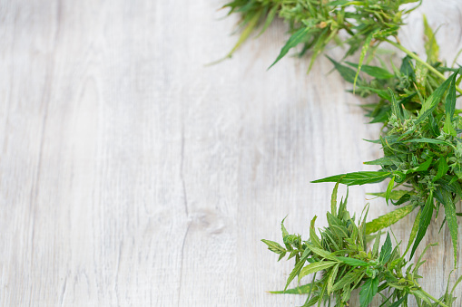 835508564 istock photo Composition of fresh marijuana plant bud with crystals and leaves on a wooden desk,  Top view,  Copy space. 1152528373