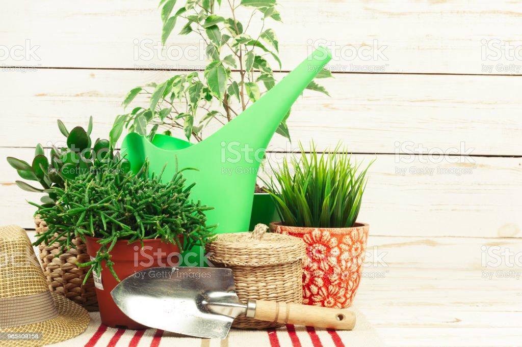composition of garden tools zbiór zdjęć royalty-free