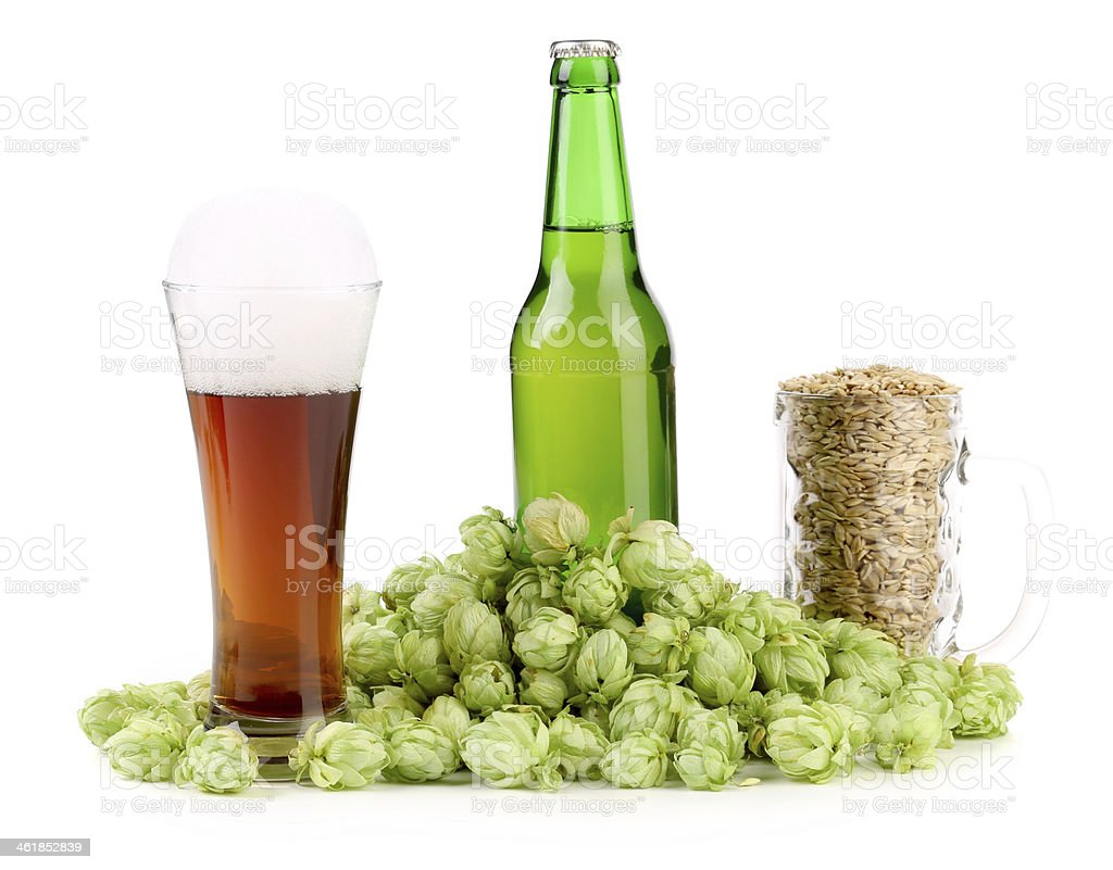Composition of hop and barley. stock photo
