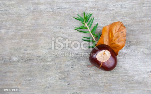 istock Composition of nuts, twigs and leaf lying on  wooden background. 639021998